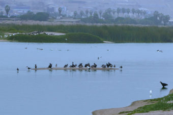 The Marvilla Lagoon  – Lima
