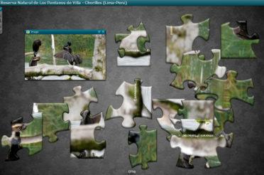 Pájaros de Los Pantanos de Villa – Rompecabezas