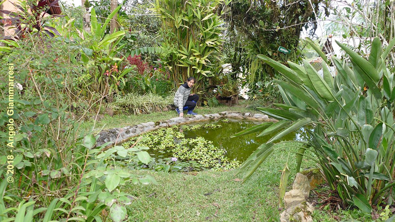 PERU - VILLA RICA | LOS OSITOS - Jardín Botánico/Botanic ...