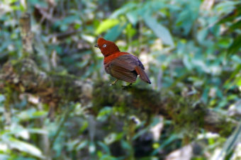 Chanchamayo – Paseo Fotográfico Catarata Chiwaku